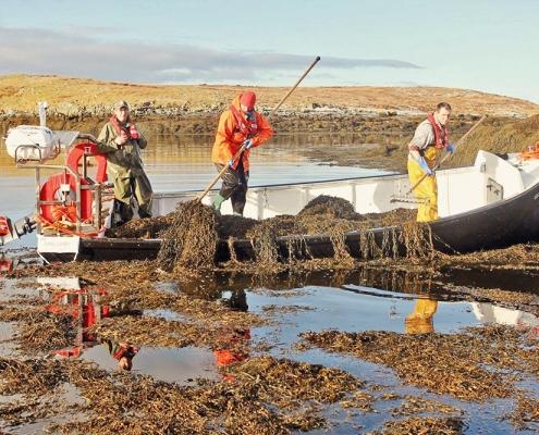 Hatalmas tengerialga-beruházás Skócia partjainál