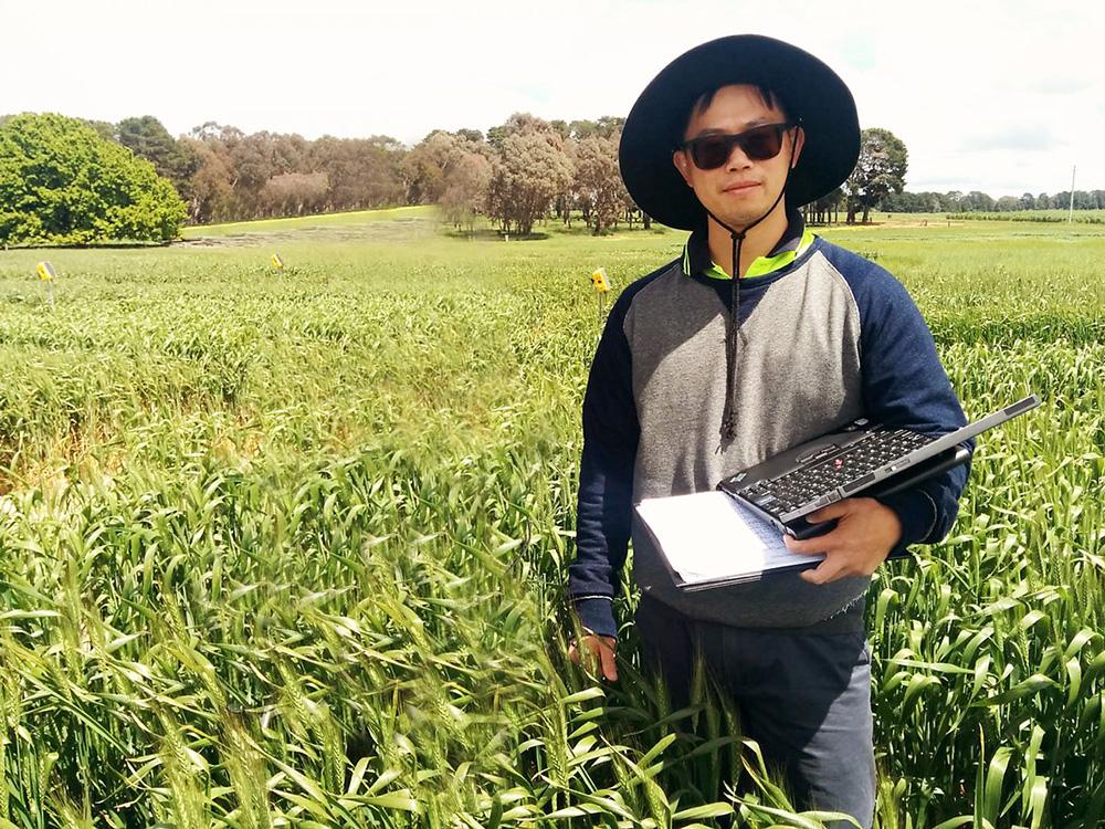Javíthatja-e a fokozott fotoszintézis a hozamot?