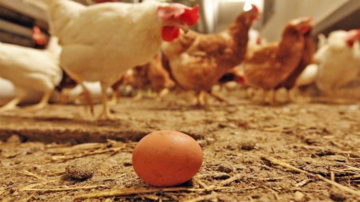 UV-fénnyel növelhető a tojás D-vitamin tartalma